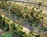 La malla espaldera por su durabilidad permite alternar los cultivos de hortalizas