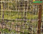 El entutorado con las malla espaldera se puede colocar de diferentes maneras según el cultivo al que se le vaya a aplicar