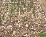 HORTOMALLAS brinda el apoyo adecuado para el crecimiento de tus cultivos