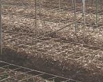 Evita daños en tu cultivo con uso de la malla espaldera HORTOMALLAS